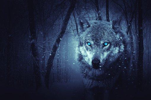wolf-2227541__340